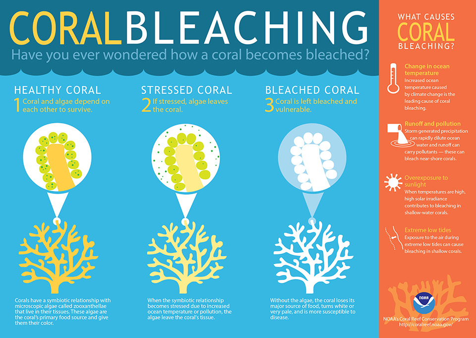 Coral Bleaching: What causes coral bleaching?
