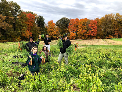 Students picking carrots at the Student Organic Farm
