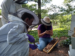 Fourth Year Veterinary Students learn how to diagnose honey bee diseases as part of a clinical rotation through the veterinary school.  The teaching apiaries provided locations where students can learn hive-handling and disease management skills.