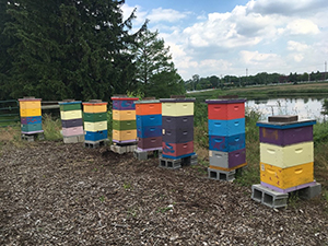 A collection of boxes for bee homes