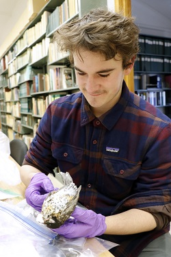 MSU Museum intern working on a project