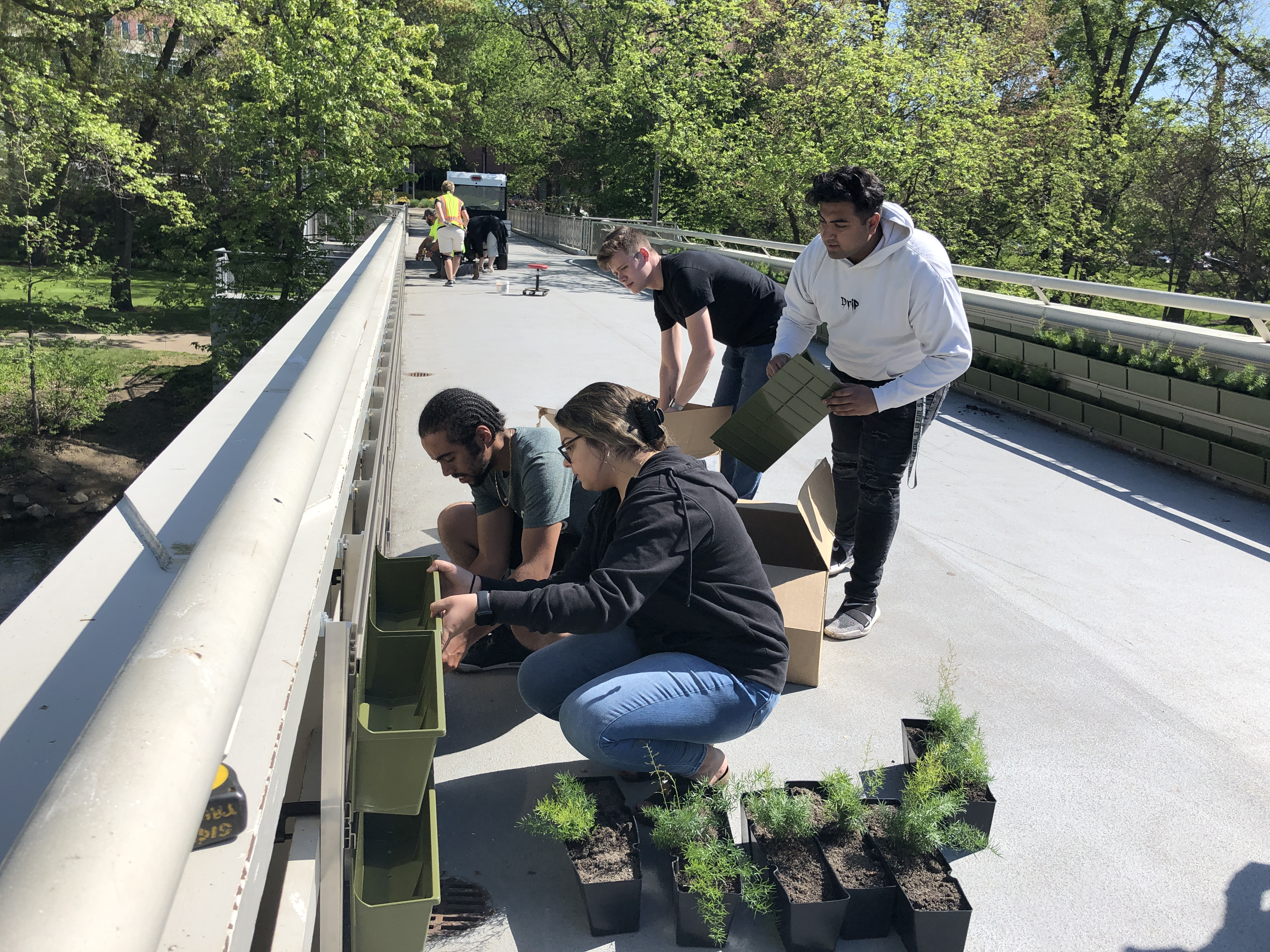 """MSU Sustainability students installing plants at the newly created """"Green Wall"""" located on the bridge leading to the MSU Main Library."""