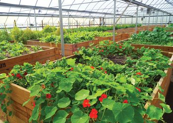 Recovery Park Farms greenhouse in Detroit.