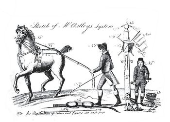 artwork from historical veterinary collections