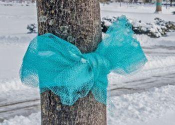 teal ribbon around tree