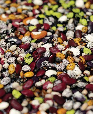 Seeds at Svalbard Global Seed Vault