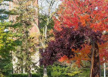 MSU Campus in the Fall