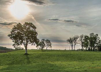 field at sunrise