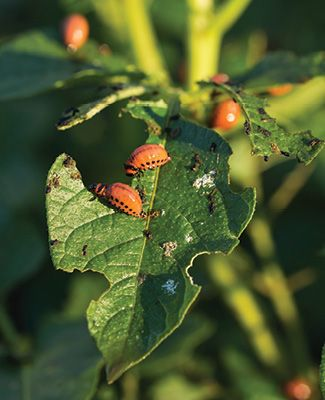 plant leaf with insects