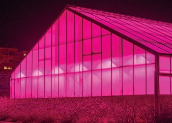 Pink LEDS in MSU's greenhouse