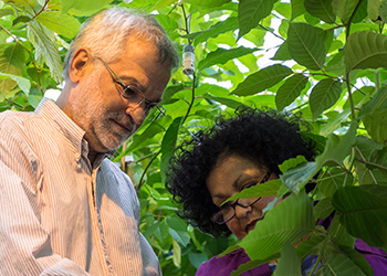 University Distinguished Professor and plant biology expert Dean DellaPenna could have gone anywhere but he chose MSU.