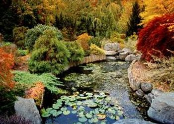 The Kathleen and Milton Muelder Japanese Garden is one of the many wonders in the seven-acre Clarence E. Lewis Landscape Arboretum, that is part of the MSU Horticulture Gardens.